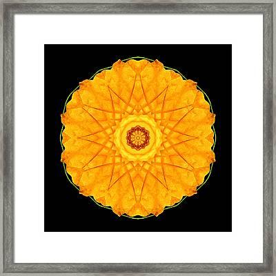 Orange Nasturtium Flower Mandala Framed Print