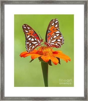 Orange On Orange Framed Print