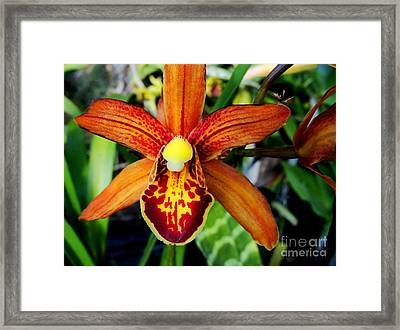 Framed Print featuring the photograph Orange Orchid by Kristine Merc