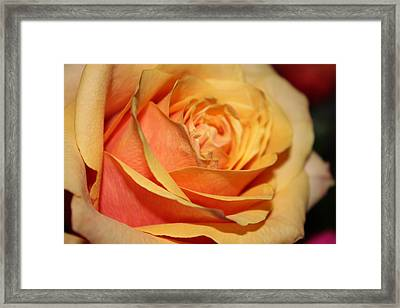 Framed Print featuring the photograph Orange Passion by Judy Palkimas