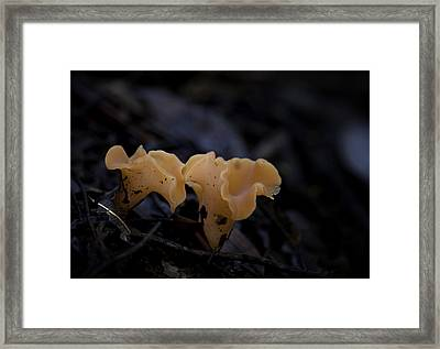 Framed Print featuring the photograph Orange Peel by Betty Depee