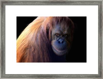Orange People Framed Print by Damian Morphou