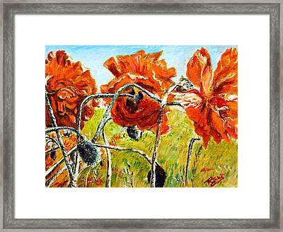 Orange Poppies Framed Print