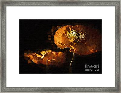 Orange Poppies Two Framed Print