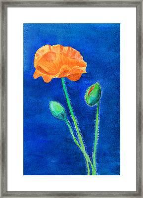 Orange Poppy Framed Print