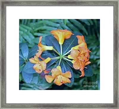 Orange Power Framed Print