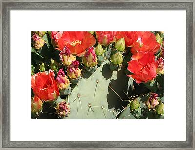 Framed Print featuring the photograph Orange Prickly by Dick Botkin