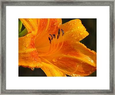 Orange Rain Framed Print by Karen Wiles