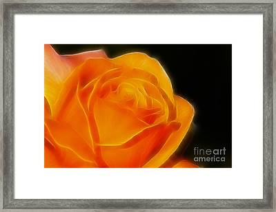 Orange Rose 6308 Framed Print by Gary Gingrich Galleries