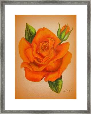 Orange Rose Framed Print by Zina Stromberg