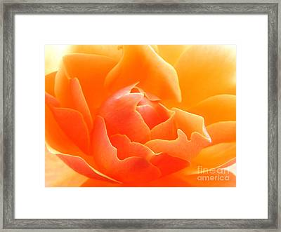 Orange Sherbet Framed Print by Deb Halloran
