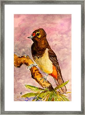 Orange-spotted Bulbul Framed Print