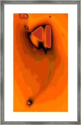 Orange Squash Framed Print by Tom Druin