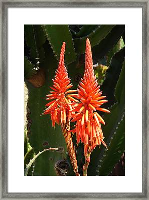 Framed Print featuring the photograph Orange Succulent by Lew Davis