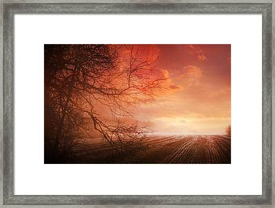 Orange Sunrise On Field Framed Print by Dorothy Walker