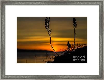 Orange Sunset Framed Print by Arlene Sundby
