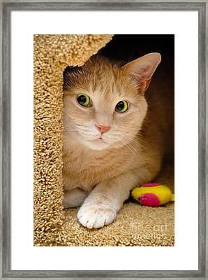 Orange Tabby Cat In Cat Condo Framed Print