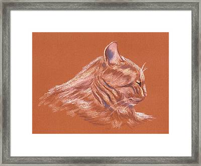 Orange Tabby Cat In Profile Framed Print by MM Anderson