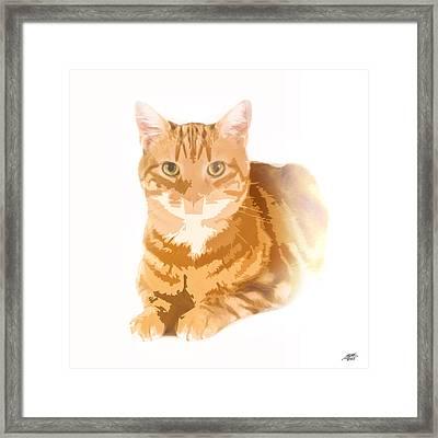 Orange Tabby Framed Print by Steve Huang