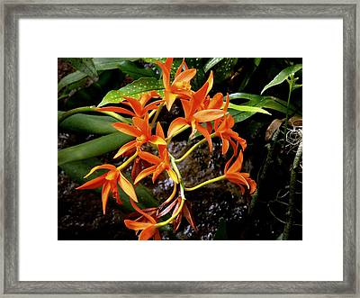 Orange Tendrils Framed Print