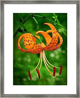 Orange Tiger Lily Framed Print