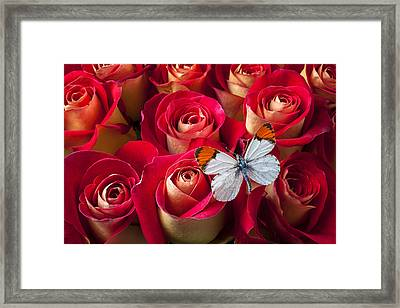 Orange Tip Butterfly Framed Print by Garry Gay