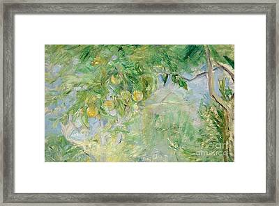 Orange Tree Branches Framed Print