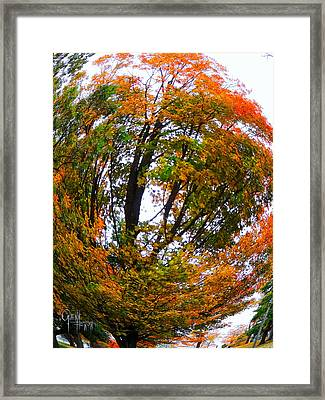 Orange Tree Swirl Framed Print