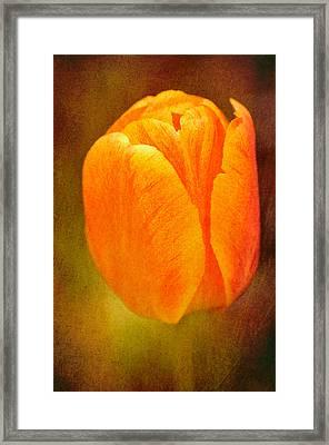 Orange Tulip Brown Texture Framed Print