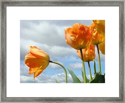 Orange Tulip Flowers Art Prints Tulips Floral Framed Print