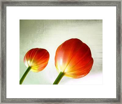Orange Tulip Pops Framed Print by Julie Magers Soulen