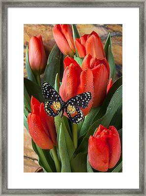 Orange Tulips And Butterfly Framed Print by Garry Gay