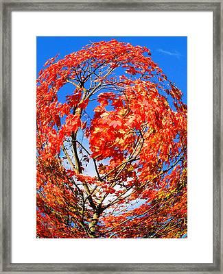 Orange Twirl -1 Framed Print