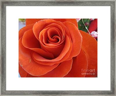 Orange Twist Rose 2 Framed Print
