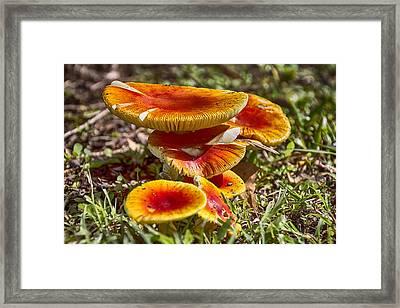 Orange V4 Framed Print by Douglas Barnard