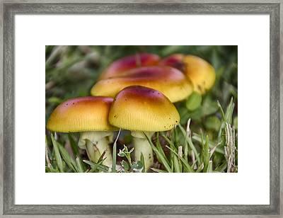 Orange V5 Framed Print by Douglas Barnard