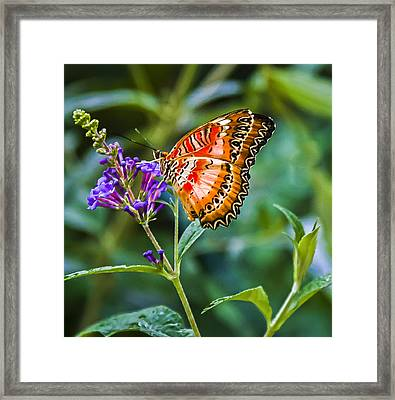 Orange White And Black Stripes On Purple Framed Print by Karen Stephenson