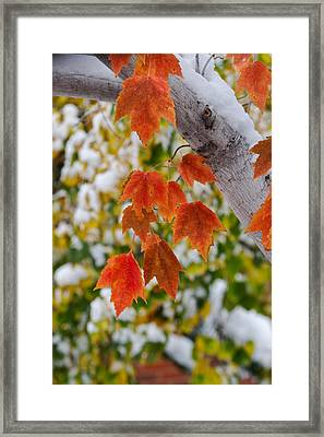 Orange White And Green Framed Print