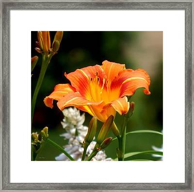 Orange And Yellow Glory Framed Print