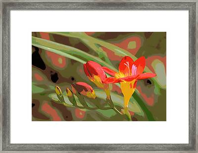 Orange Yellow Freesia 1 Framed Print by Sheri McLeroy