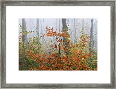 Orange You Glad Framed Print by Juergen Roth