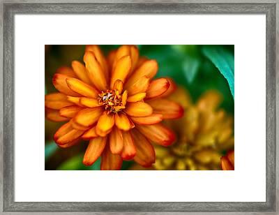 Orange You Glad You're A Flower Framed Print by Sennie Pierson