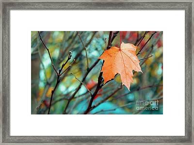 Orange You Gonna Fall Framed Print by Nina Silver