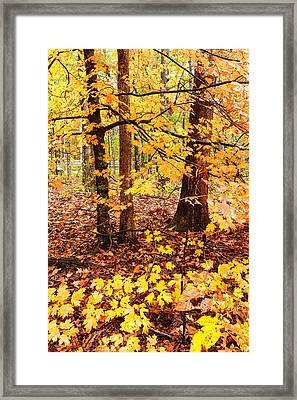 Orange Zen - Beaver's Bend State Park - Broken Bow Oklahoma Framed Print by Silvio Ligutti