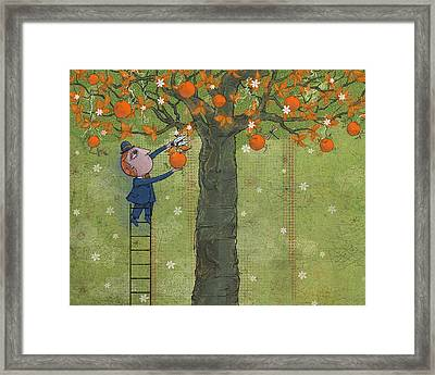 Oranges And Dragonfly Three Framed Print by Dennis Wunsch