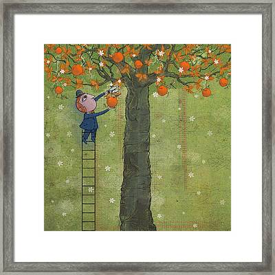 Oranges And Dragonfly Two Framed Print
