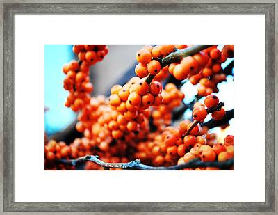 Oranges Framed Print by Charlie Gaddy