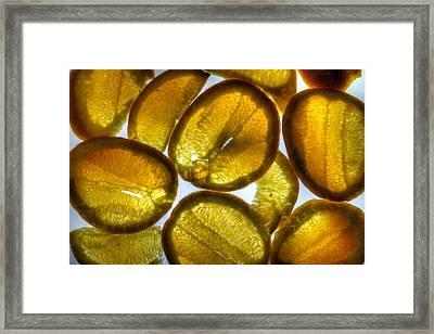 Oranges Framed Print by Jane Linders