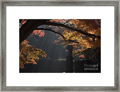 Orangish Framed Print