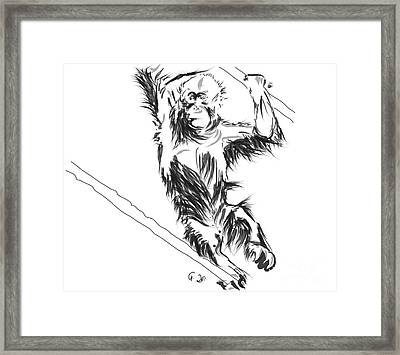Orangutan 3 Framed Print by Go Van Kampen